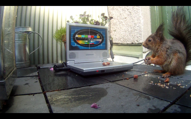 squirrel+modu8_testcard